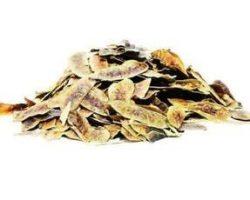 Herbal Vital Açlık Otu Devegözü Kullananlar